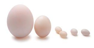 在鸡蛋和鸟鸡蛋之间 免版税库存照片
