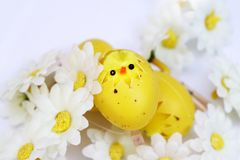 在鸡蛋的复活节鸡 库存照片