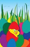 在鸡蛋的复活节鸡 免版税库存照片