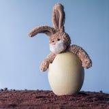 在鸡蛋的沮丧的复活节兔子 免版税库存照片