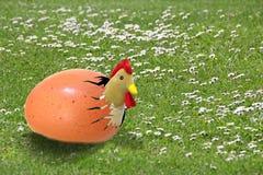 在鸡蛋的自由放养的鸡 库存照片