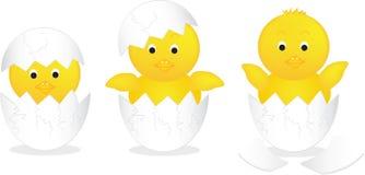 在鸡蛋的婴孩小鸡 免版税图库摄影
