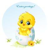 在鸡蛋的年轻小鸡 库存照片