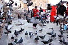 在鸽子中的儿童游戏在Yeni Camii (新的清真寺), Eminonu,伊斯坦布尔,土耳其旁边 免版税库存照片