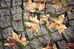 在鹅卵石街道上的秋叶 免版税图库摄影