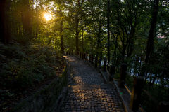 在鹅卵石路的日落在森林里 免版税图库摄影