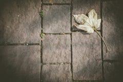 在鹅卵石路面的下落的黄色枫叶在秋天 免版税图库摄影