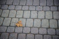 在鹅卵石路面的下落的黄色枫叶在秋天 免版税库存图片