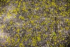 在鹅卵石路面的落的开花样式 库存图片