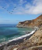 在鹈鹕的天蓝色的海洋 免版税库存图片