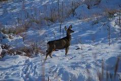 在鹿夜间房子例证新的s之后小的结构树冬天年 库存照片