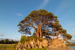 在麦卡锡平均观测距离城堡废墟的被日光照射了树在凯利圆环的港湾Leane在基拉尼爱尔兰 免版税库存图片