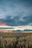 在麦地上的暴风云在晚上 免版税库存照片