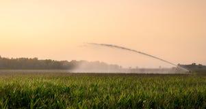 在麦地的灌溉 免版税库存图片