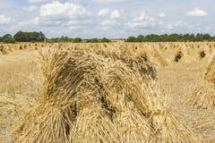 在麦地的麦子stooks在收割期 图库摄影