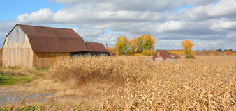 在麦地附近的老谷仓 库存图片