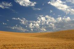 在麦子之下的多云域天空 免版税图库摄影