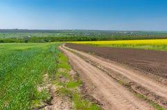 在麦子和开花的强奸农业领域之间的土路在中央乌克兰 库存照片