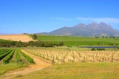 在麦子和葡萄领域之间的路 免版税库存图片