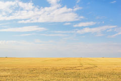 在麦子收获以后的亩茬地 免版税库存照片