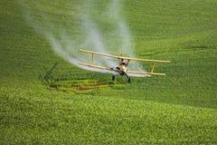 在麦子的喷洒的杀虫药 图库摄影