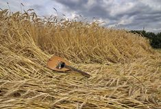 在麦子的曼陀林 免版税库存图片