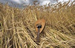 在麦子的曼陀林 免版税库存照片