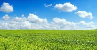 在麦子的美好的蓝色域 库存照片