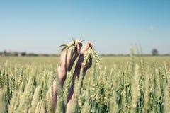 在麦子的脚 免版税库存图片