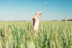 在麦子的脚 库存照片