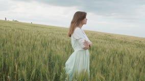 在麦子的高绿色小尖峰的中美丽的年轻俄国女孩在领域的 享受夏天,人的a和谐的年轻女人  股票录像