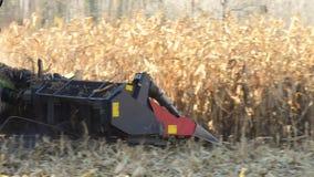 在麦子麦地的联合收割机 股票录像