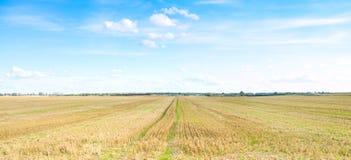 在麦子黄色之下的cuted域午间星期日 图库摄影