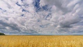 在麦田上的云彩夏日- 4K时间间隔 股票视频