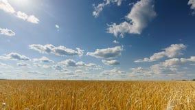 在麦田上的云彩晴天- 4K时间间隔 影视素材