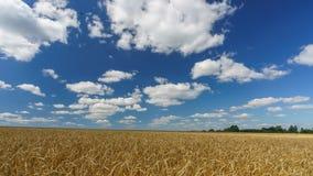 在麦田上的云彩晴天- 4K时间间隔 股票视频