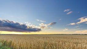 在麦田上的日落- 4K时间间隔 影视素材