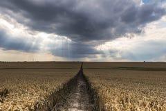 在麦田上的黑暗的云彩 库存图片