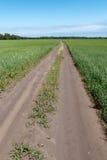 在麦田之间的领域路 库存图片