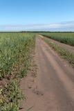 在麦田之间的领域路 库存照片