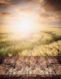 在麦田和日落天空,自然背景的土气木桌 库存照片