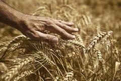 在麦田的农夫手 免版税库存图片