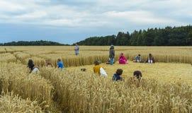 在麦田的庄稼圈子 免版税图库摄影