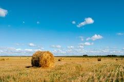 在麦田的新近地滚动的干草捆 免版税库存照片