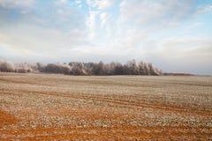 在麦田的早期的冬天 图库摄影