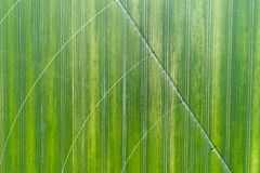 在麦田的灌溉系统 免版税库存图片