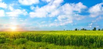 在麦田的美好的日落 农业横向 免版税库存图片