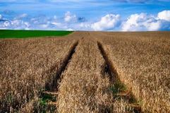 在麦田的路和与云彩的蓝天 农村的本质 乡下风景 免版税库存图片