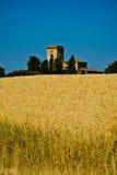 在麦田的钟楼 库存照片