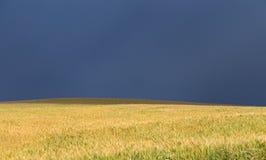 在麦田的风暴风暴 图库摄影